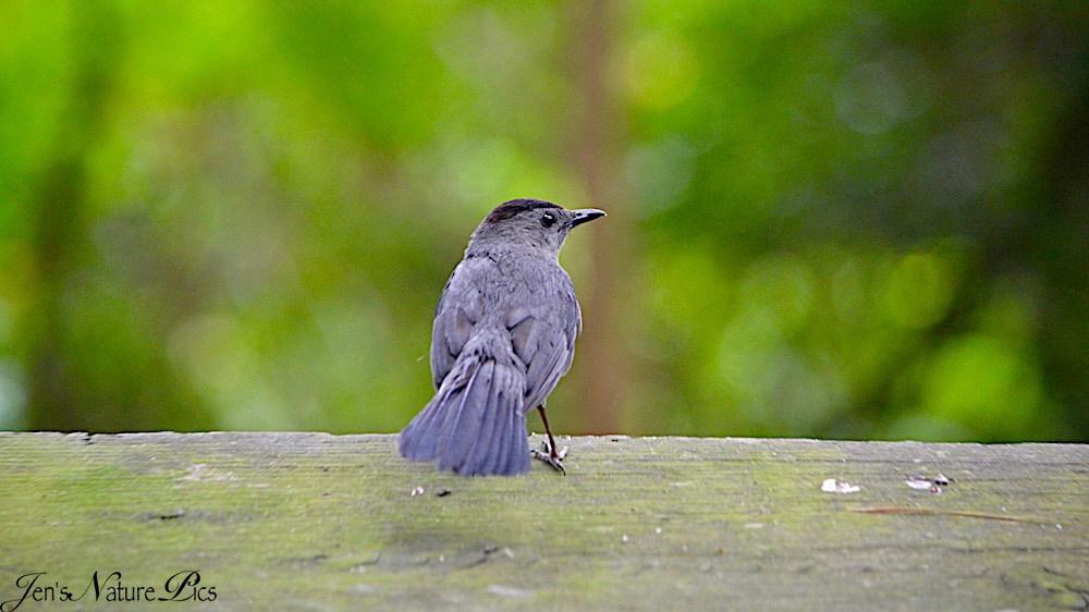 dsc_0610-black-bird.jpg