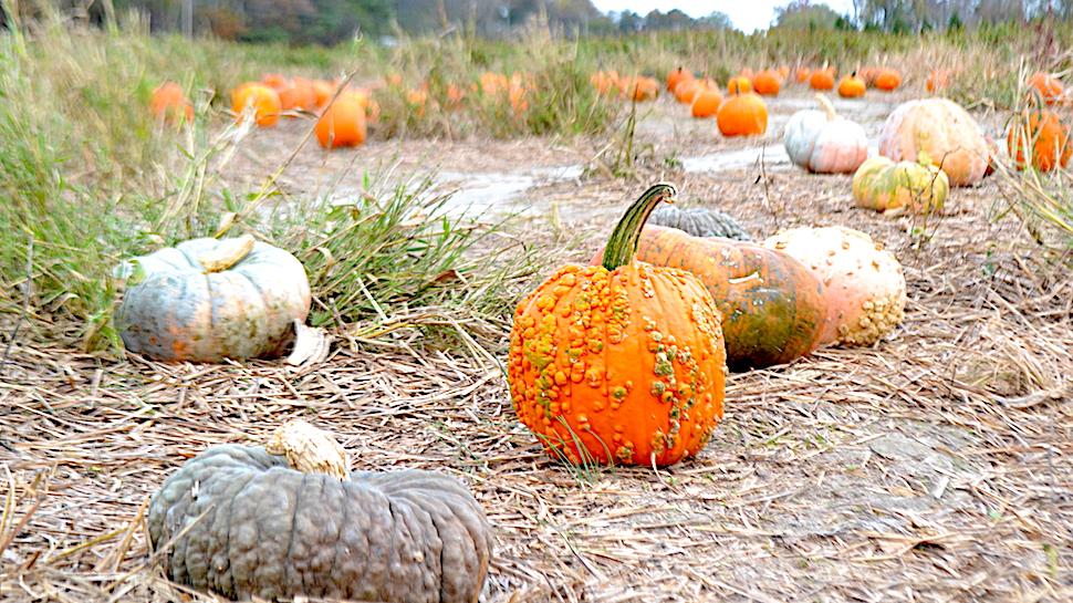 close-up pumpkins