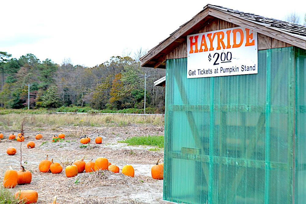 Hayride sign:pumpkins