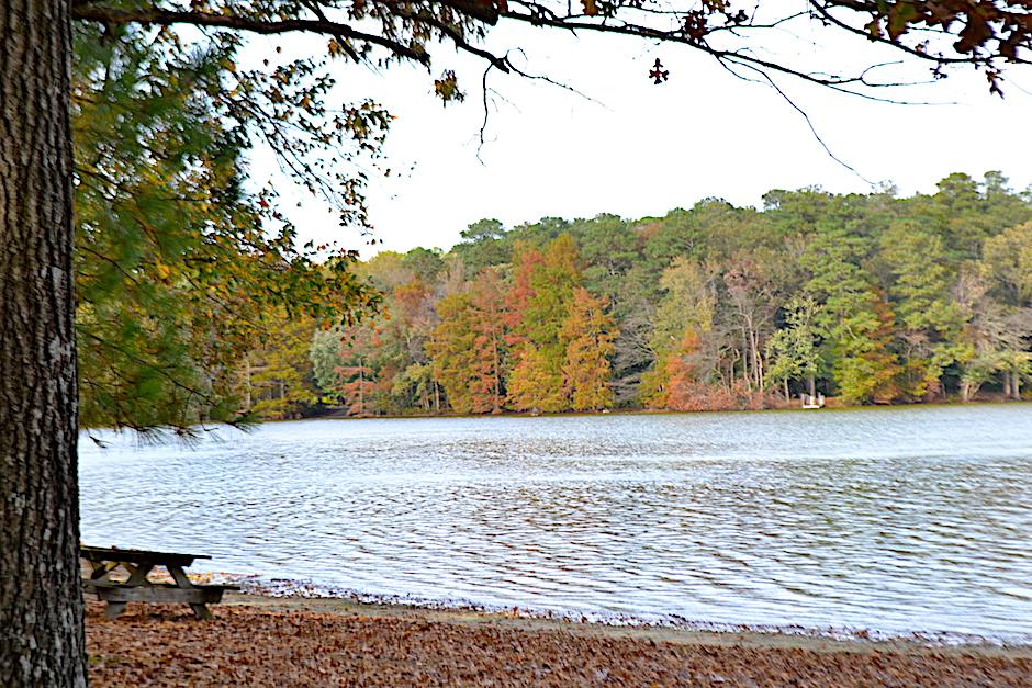 trap pond fall trees